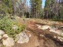 090719-Pole-Mountain-Aspen-Trail-02