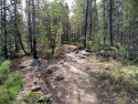 090719-Pole-Mountain-Aspen-Trail-03
