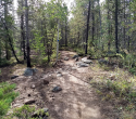 090719-Pole-Mountain-Aspen-Trail-03