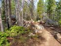 090719-Pole-Mountain-Aspen-Trail-05