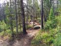 090719-Pole-Mountain-Aspen-Trail-06
