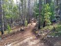 090719-Pole-Mountain-Aspen-Trail-07
