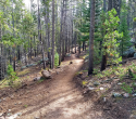 090719-Pole-Mountain-Aspen-Trail-07