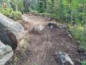 090719-Pole-Mountain-Aspen-Trail-12
