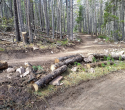 090719-Pole-Mountain-Aspen-Trail-14