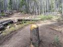 090719-Pole-Mountain-Aspen-Trail-15