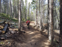 090719-Pole-Mountain-Aspen-Trail-18