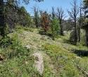 09-Pin-flags-designate-future-trail